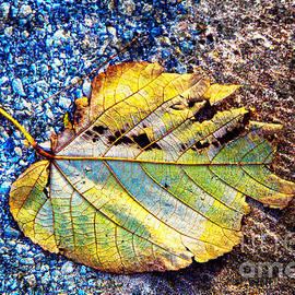 Jeanette Brown - Fallen Leaf