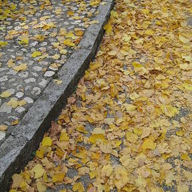 Fallen Leaves on an Italian Sidewalk by Crow River North Photography