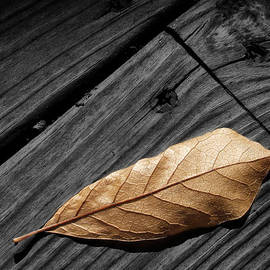 Randall Nyhof - Fallen Magnolia Leaf on a Gray Wooden Deck