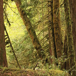 Carol Groenen - Falling Trees in the Rainforest