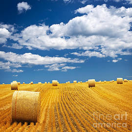 Farm field with hay bales by Elena Elisseeva