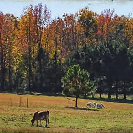 Farm Journal - Grazing by Paulette B Wright