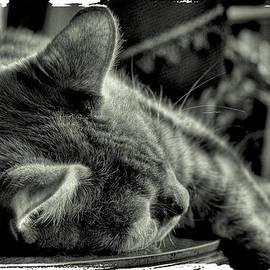 David Patterson - Fatigued Feline