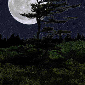 Favorite Tree in Full Moon Silhouette by Marty Saccone