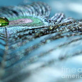 Feather Gem by Krissy Katsimbras