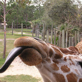 Clif Jackson - Feeding Time At The Zoo