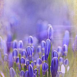Feelin' blue ... by Chris Armytage