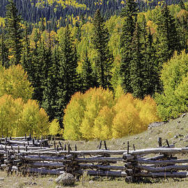 Fence And Fall Colors II by David Waldrop