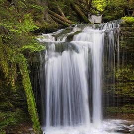Mark Kiver - Fern Falls