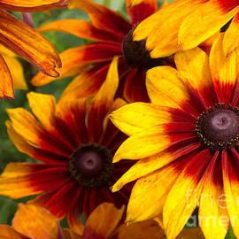 Ann Horn - Fiery Flowers