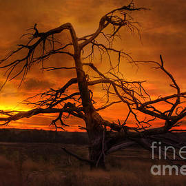 Fiery Sunrise by Photography by Laura Lee