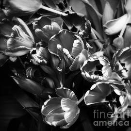 Miriam Danar - Fiery Tulips in Black and White