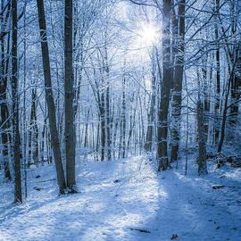 First Snow by Diane Diederich