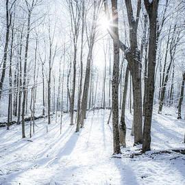 First Snowfall by Diane Diederich