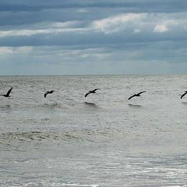 Cynthia Guinn - Five Pelicans