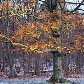 Randi Grace Nilsberg - Flaming Tree