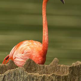 Bill Tiepelman - Flamingo Speaks