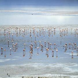 Flamingos light by Guido Montanes Castillo