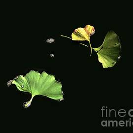 Dale   Ford - Floating Ginko Leaves
