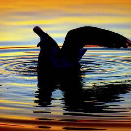 Floating Wings by Karen Wiles