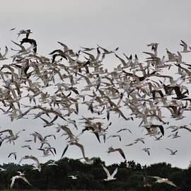 Flock by Chuck Hicks