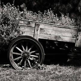 Camille Lopez - Floral Cart