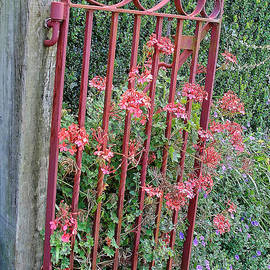 Floral Garden Gate by Linda Phelps