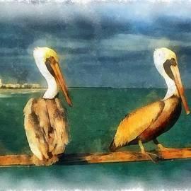 Florida Keys Brown Pelicans by Maciek Froncisz