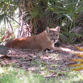 Mitchell Rudin - Florida Panther