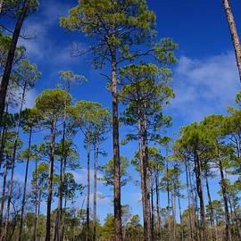 Henry Kowalski - Florida Pines and Palmettos