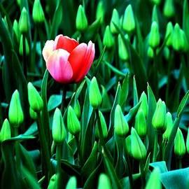 Benjamin Yeager - Flourish