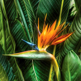 Flower - Bird of paradise by Mike Savad