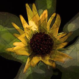 Colin Hunt - 10178 Yellow Sunflower