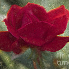 Luther Fine Art - Flower - Living Rose - Luther Fine Art