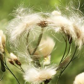 Danielle Allard - Flower of love