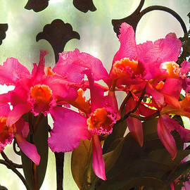 Mike Savad - Flower - Orchid - It