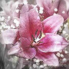 Pink on Silver - Flower Photography by Miriam Danar