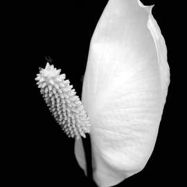 Flower Power Peace Lily by Tom Mc Nemar