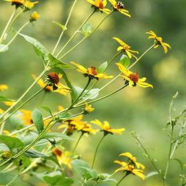 Chuck  Hicks - Flower Profile