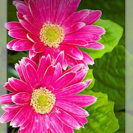 Walter Herrit - Flower1