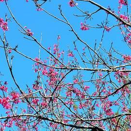 Kay Gilley - Flowering Trees