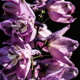 Julien Boutin - Flowers close up