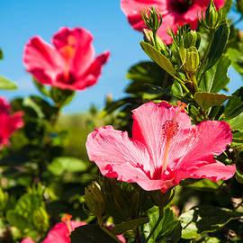 Zina Zinchik - Flowers of paradise