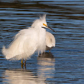 Kathleen Bishop - Fluffy Egret