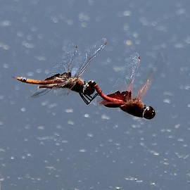 Reid Callaway - Togetherness Fly United 7