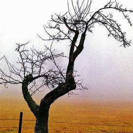 Daniel Thompson - Fog and Tree