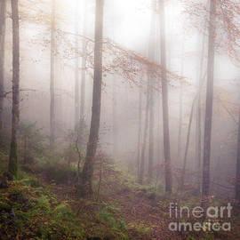 Alexander Kunz - Fog in the forest