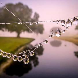 Foggy morning dew