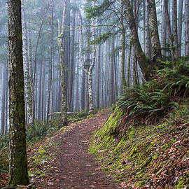 Foggy Morning In The Forest by Peggy Collins