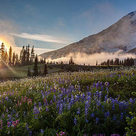 Foggy Rainier Sunset by Mike Reid